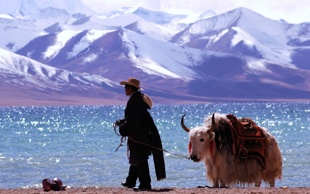 Report busts China's myth on protecting Tibet